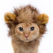 Шапка-львенок для кошек