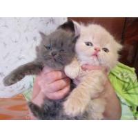 чистотел от глистов для кошек таблетки